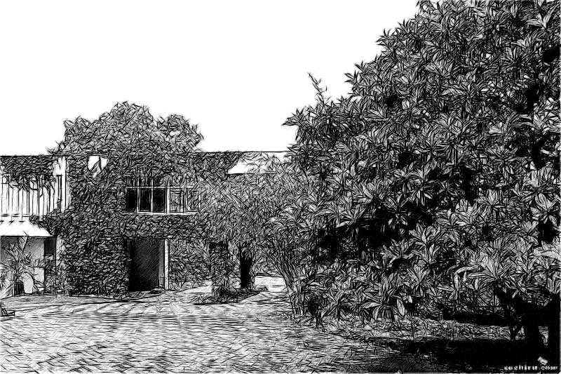 Субтропический ботанический сад Кубани