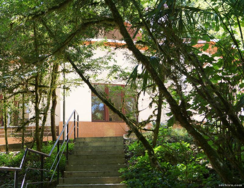 Экологический информационный центр в Тисо-самшитовой роще