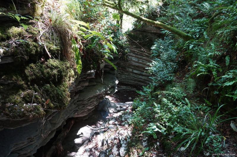 каменные ручьи в Тисо-самшитовой роще