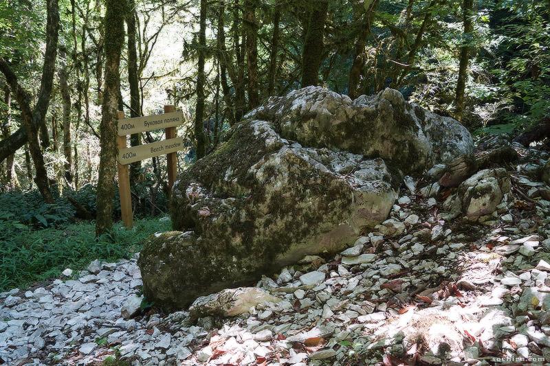 Буковая поляна в Тисо-самшитовой роще