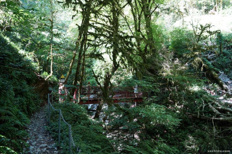 Мостик через Глубокую балку в Тисо-самшитовой роще
