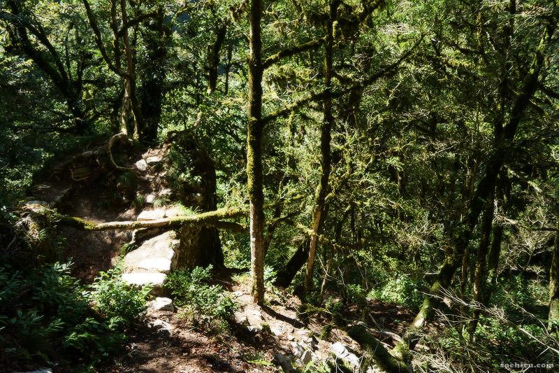 Древняя крепость в фантастическом самшитовом лесу