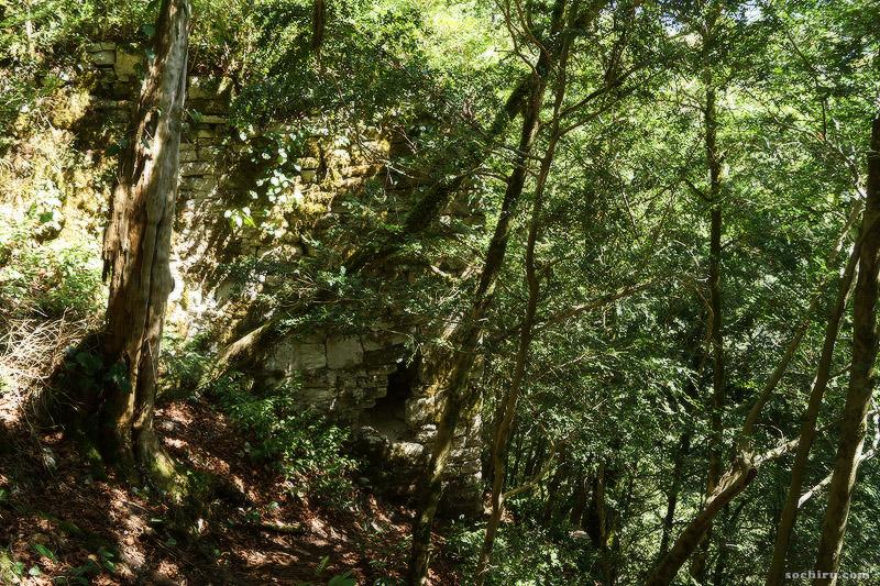 Тисо-самшитовая роща: стена древней крепости