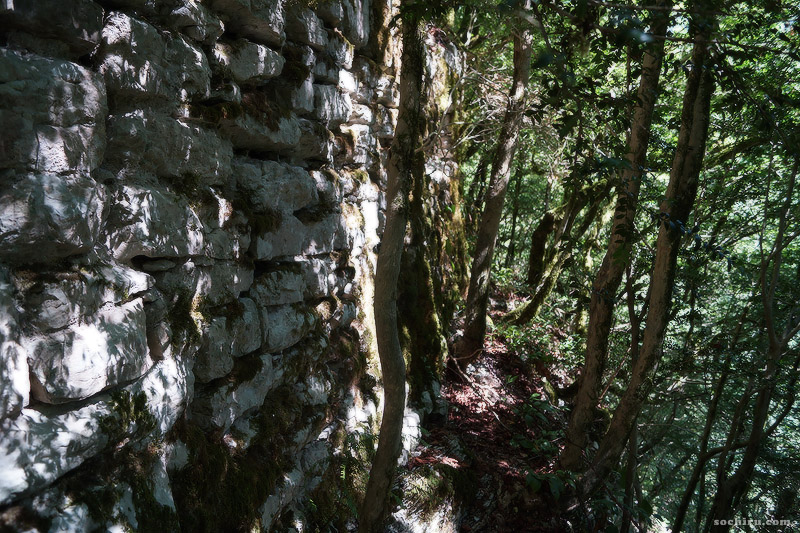 Тисо-самшитовая роща: Древняя крепость