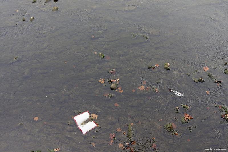 цветение воды в реке Сочи