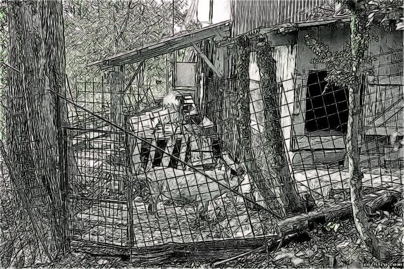 Свинарник у лесопарка Юбилейный