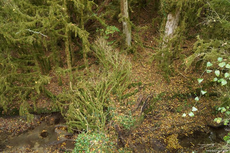 колхидский самшитовый лес
