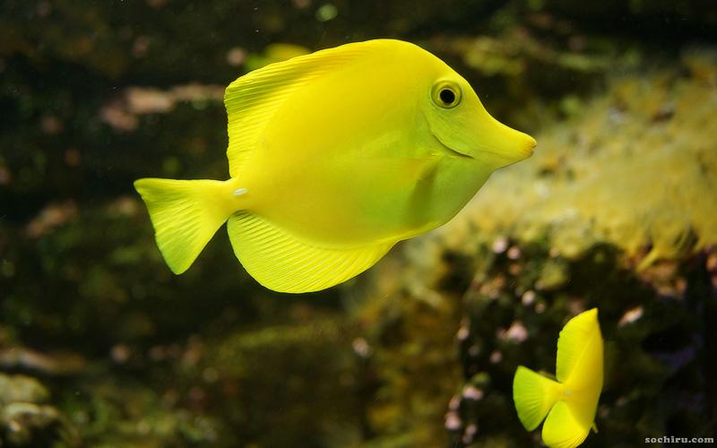 Аквариум и морской зоопарк на Мацесте