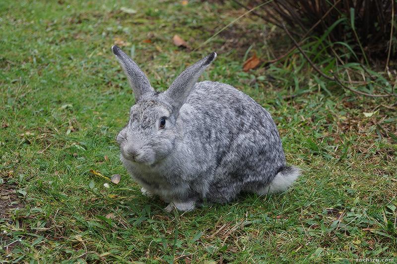 Санаторий Октябрьский: кролик