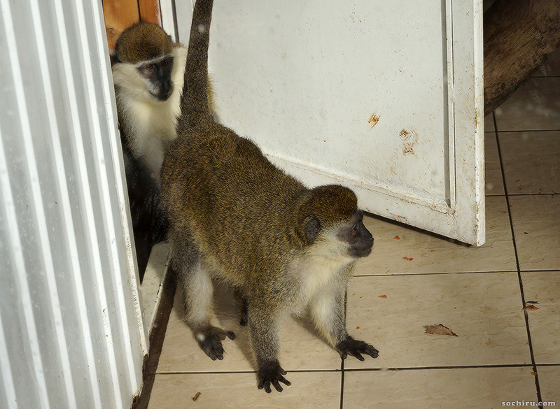 Санаторий Октябрьский: приматы