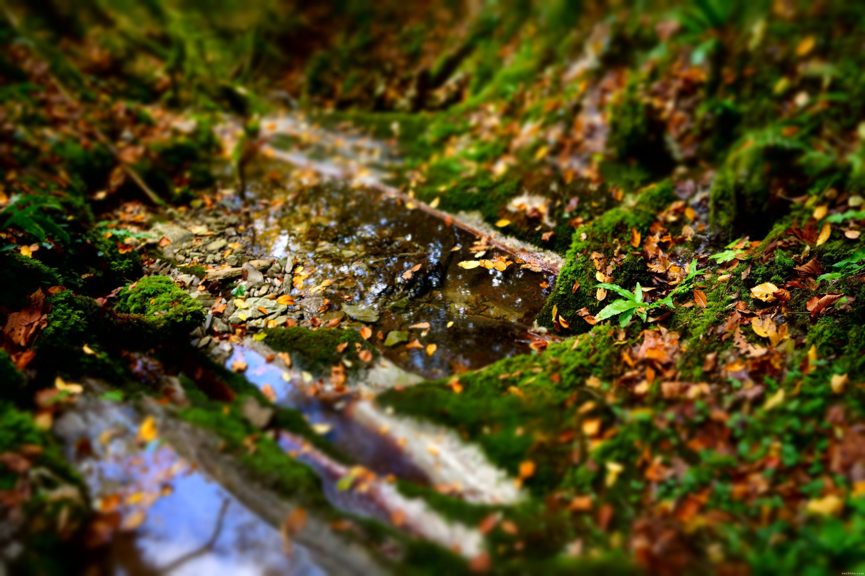самшитовый лес: мох