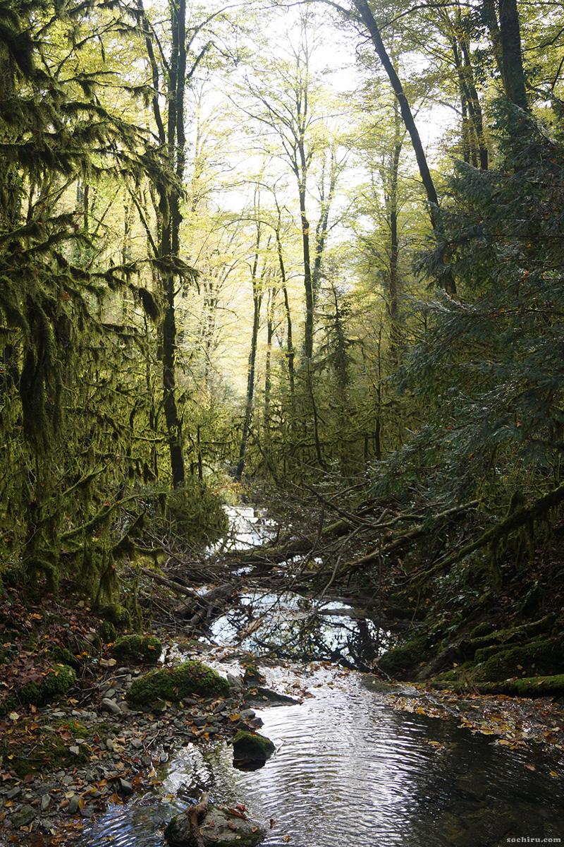 Речка в самшитовом лесу