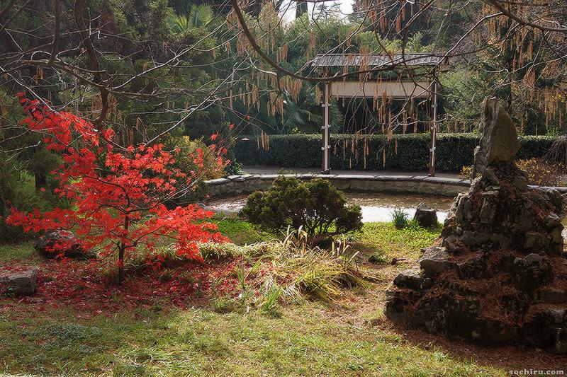 Клён дланевидный в японском отделе парка Дендрарий