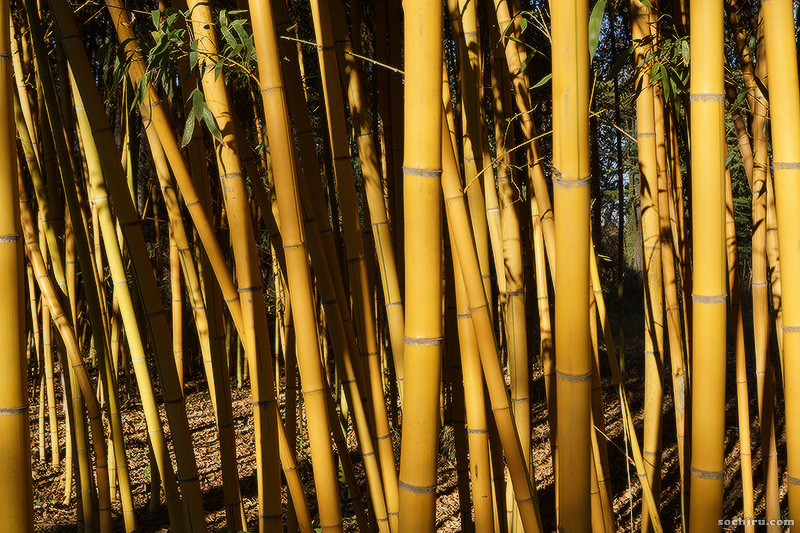 Бамбук в Южных культурах