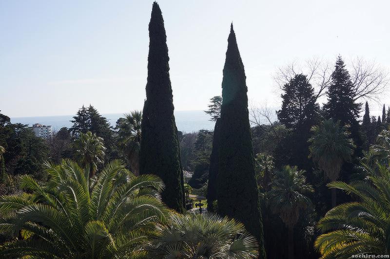 Кипарисы в парке Дендрарий