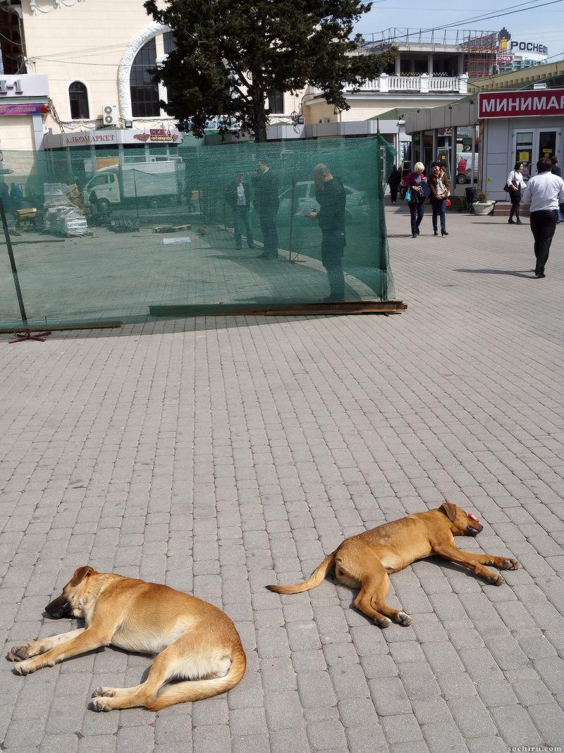 собаки у Центрального рынка