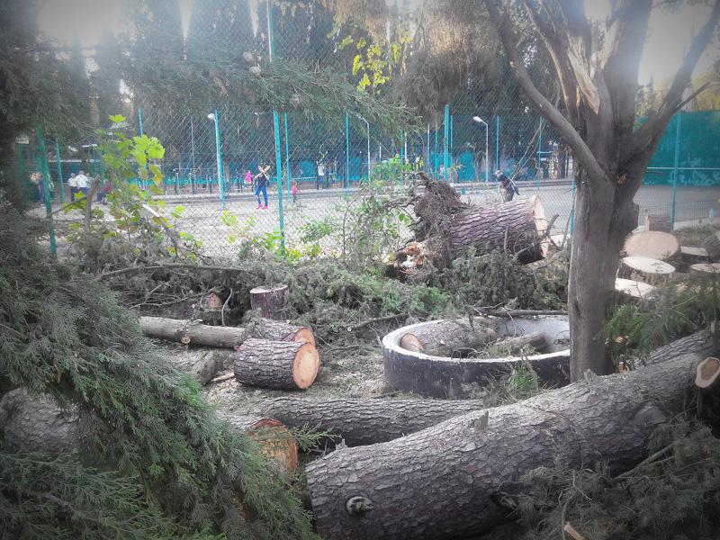 Последствия урагана в Сочи: Ривьера
