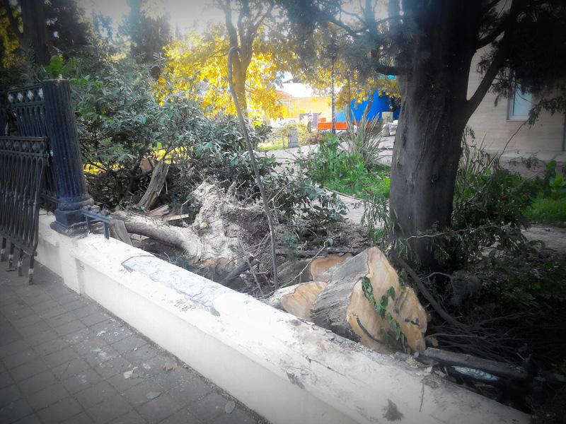 Последствия урагана в Сочи: парк Ривьера