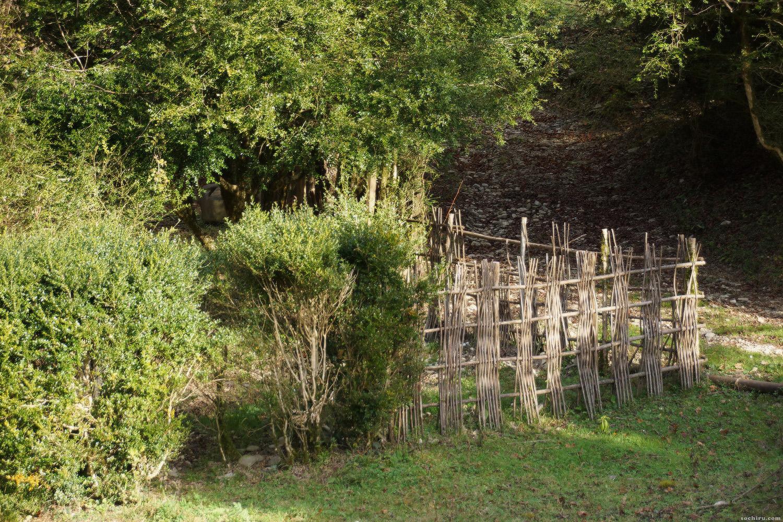 плетень в самшитовом лесу