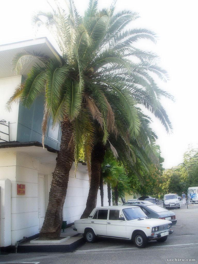 Шестёрка под пальмой