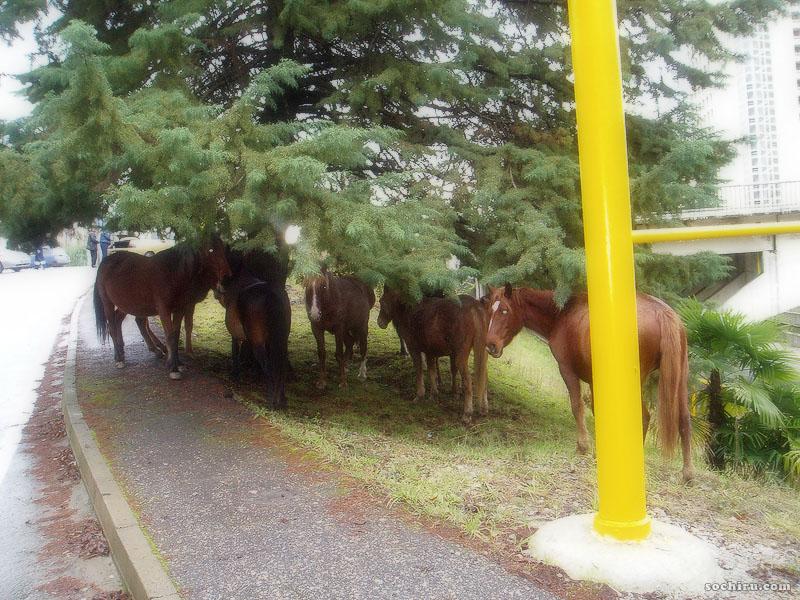 Лошади спрятались под деревом от дождя
