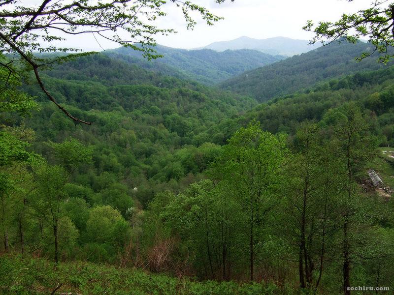 Леса предгорий