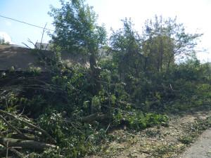 Троицк, вырубка на улице Текстильщиков