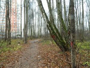 Троицк, лес за РАНовской больницей