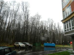 Троицк, лес на Октябрьском проспекте