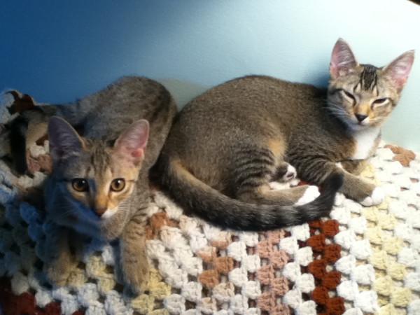 kittensonblanket
