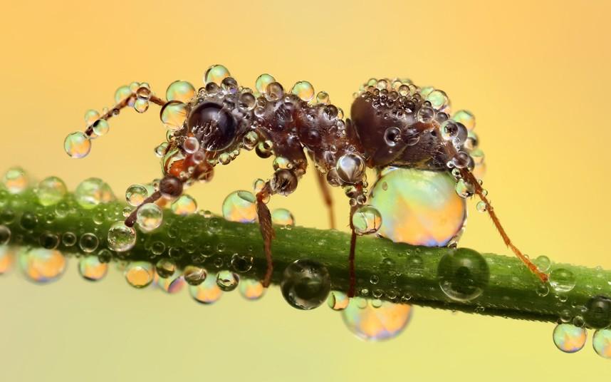 ant-best_2156254k