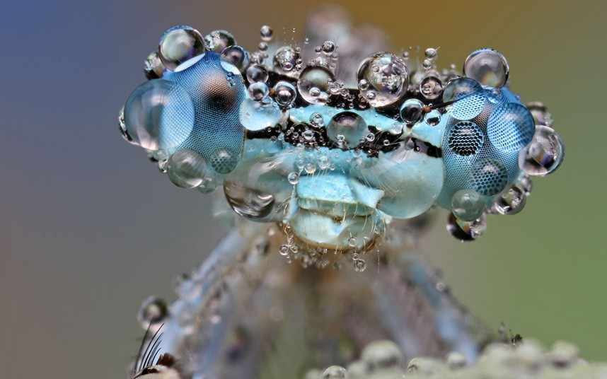 damselfly-dew_2156183k