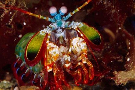 Superpower-Animals-Shrimp-1-631