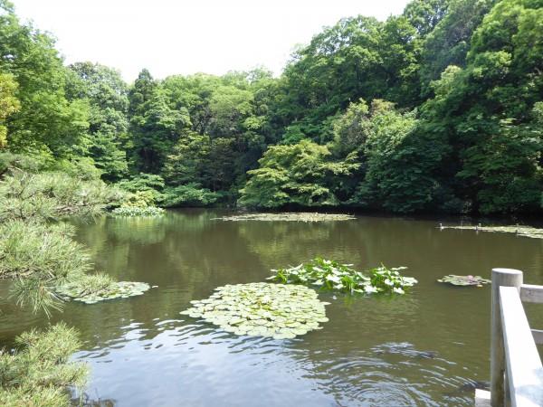 lake meji shrine2