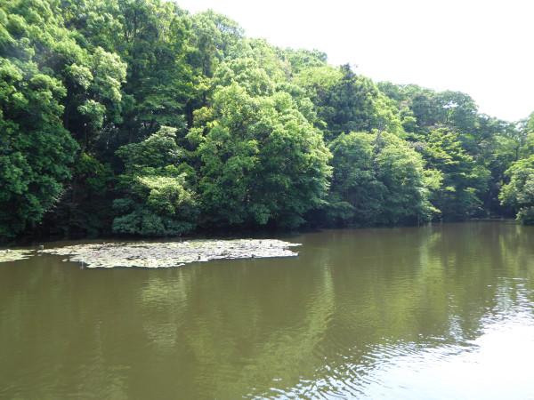 lake meji shrine5