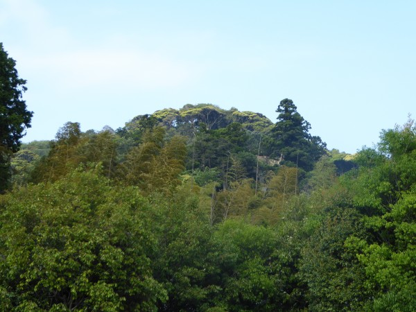 kenchoji forest 1