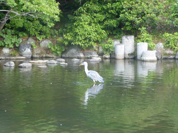 kyoto lake heron 2