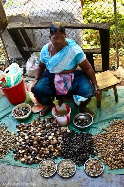people mapusa rinok seashells