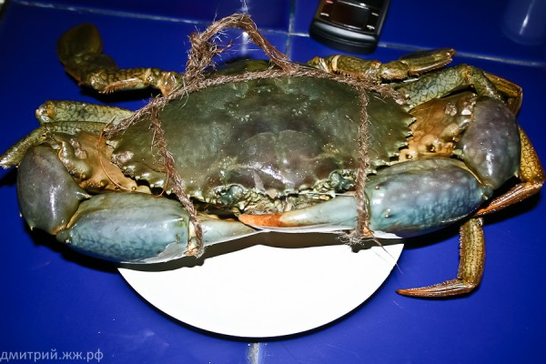 eda hotel freshcatch crab