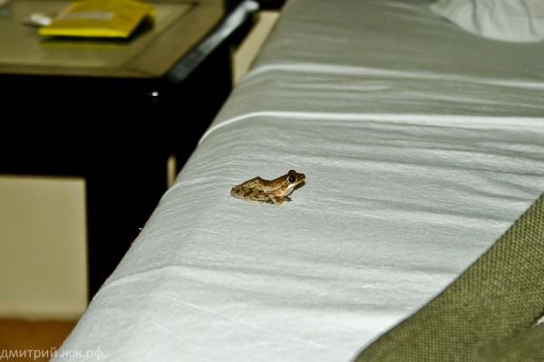 animals hotel frog
