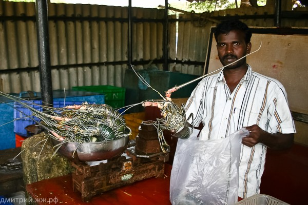 things fishmarket 2