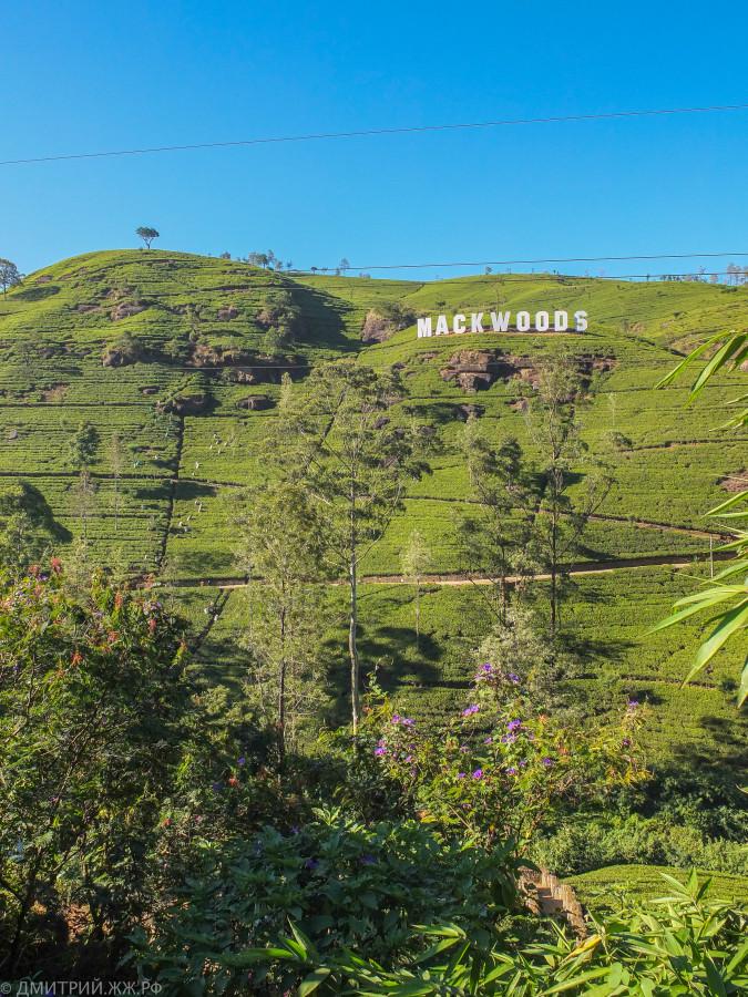 srilanka - tea factory-7