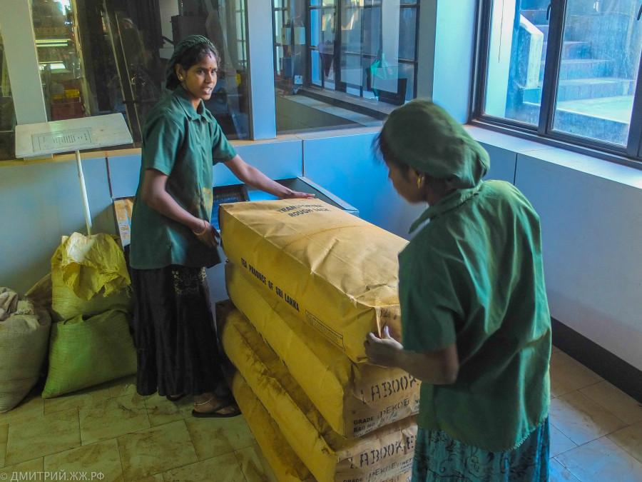 srilanka - tea factory-15
