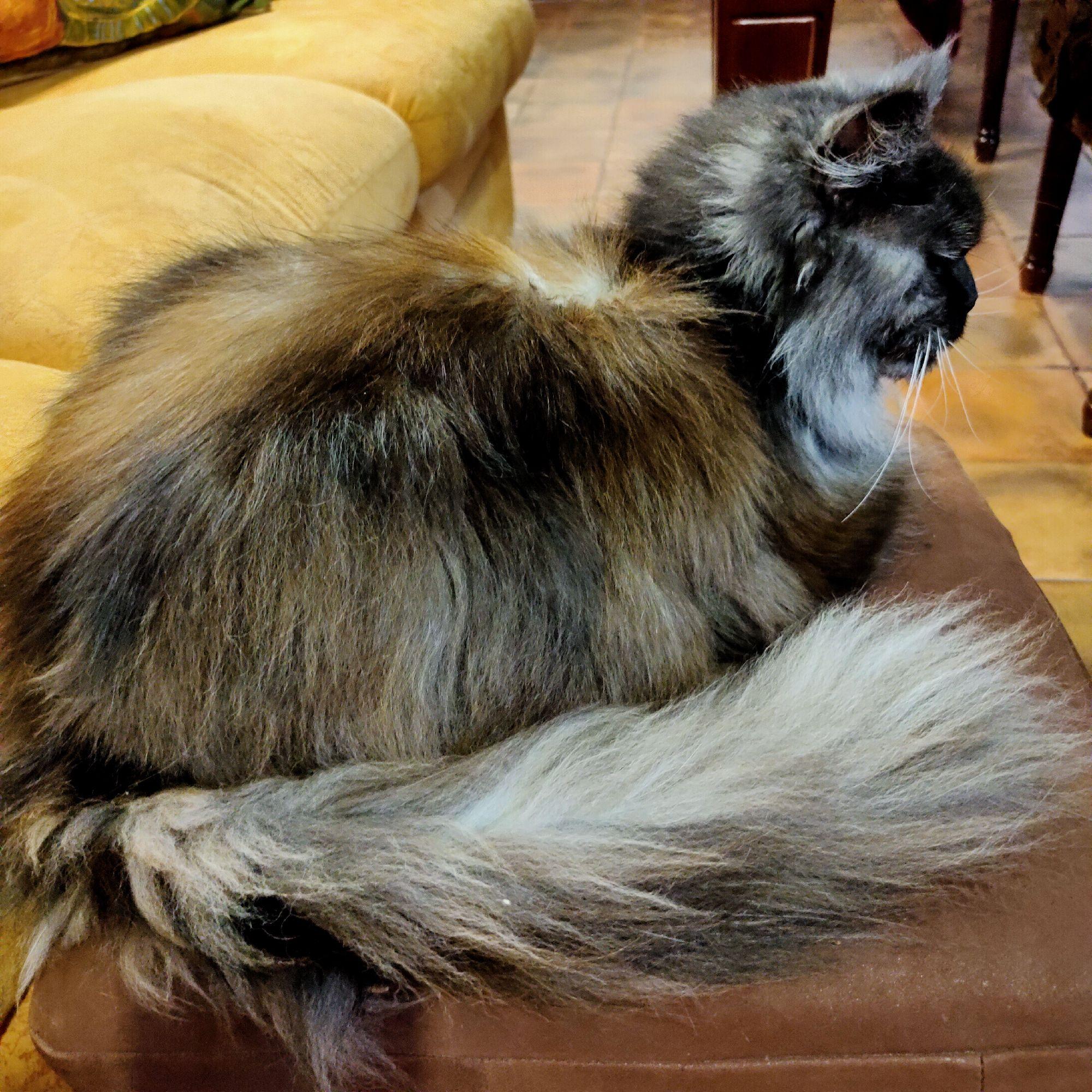А это у нас кошка теперь такого цвета. В прошлом году спина была рыжая.