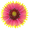 flower icon with transparancy