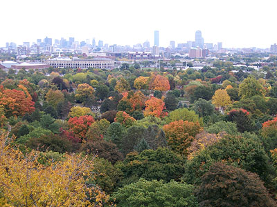 view from the washington tower at mount auburn cemetery