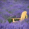 060_058_Lavender