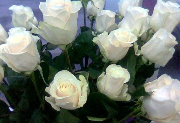 Розы для Хорхе