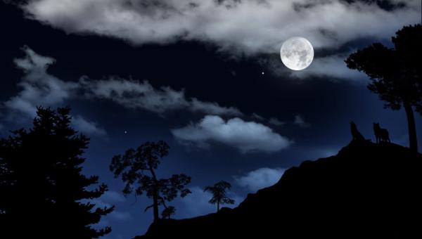Moon-Wolf-Night-544x960