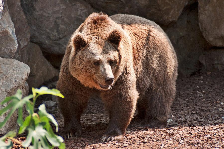 teddy_bear_by_misszoe-d4kckba